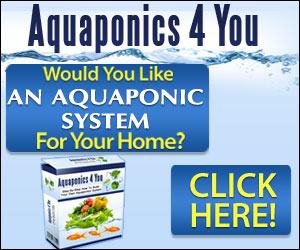 Aquaponics For You